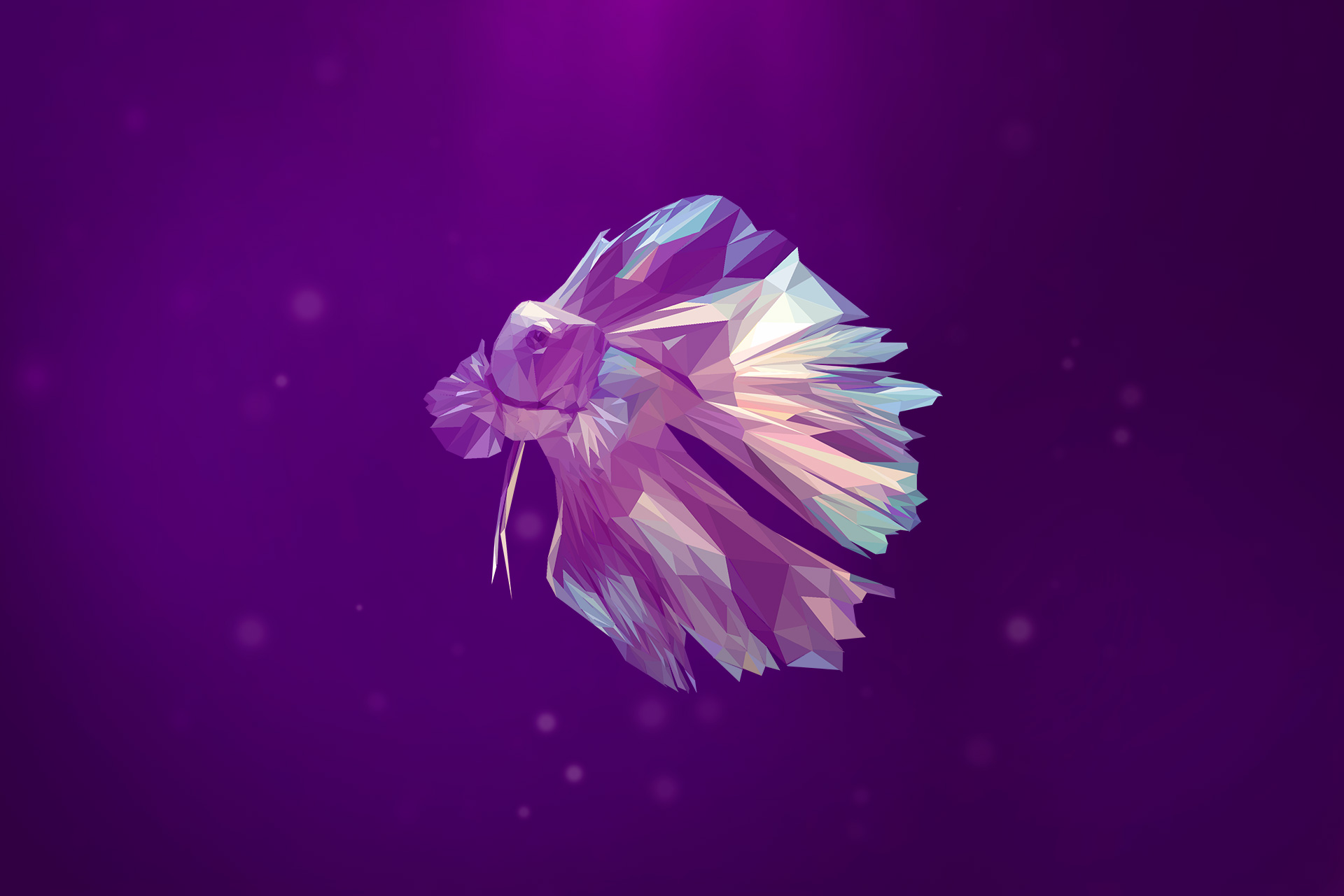 Betta-triangle-web-Slider
